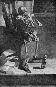 Skeleton_reading